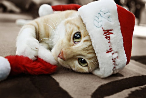 chat noel Marché de Noël de Mons En Baroeul   3 et 4 décembre 2016   Ecole  chat noel