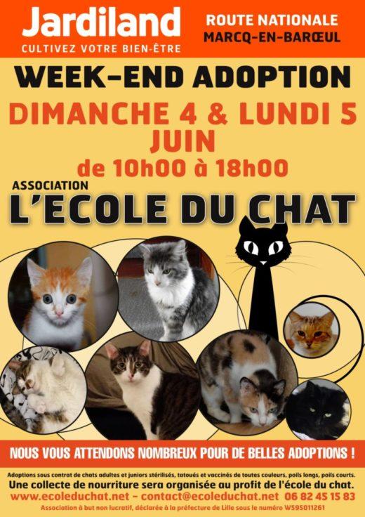 Affiche - L'école du chat - JUIN17 1