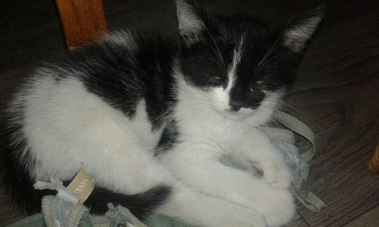 chaton_noir_blanc2