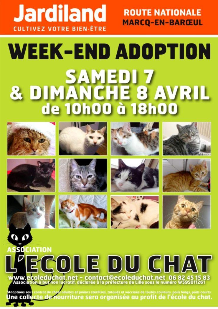 Affiche A4 - L'école du chat - avril 1