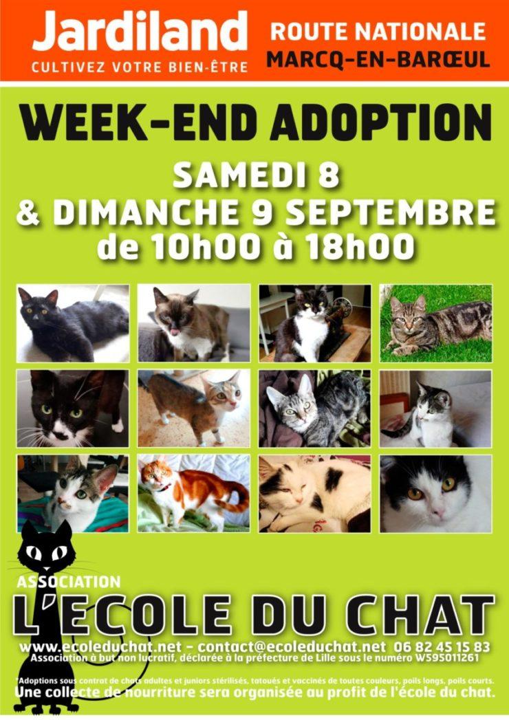 Affiche A4 - L'école du chat - SEPT 1