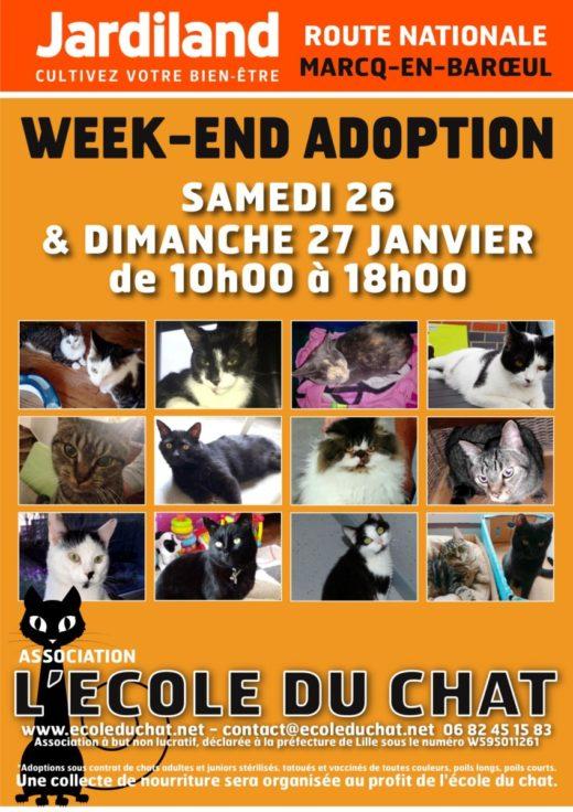 Affiche A4 - L'école du chat - JAN 1